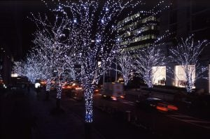 a display of christmas lights brighten cherry trees lining a tokyo street
